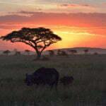 TOTO アフリカ カバー